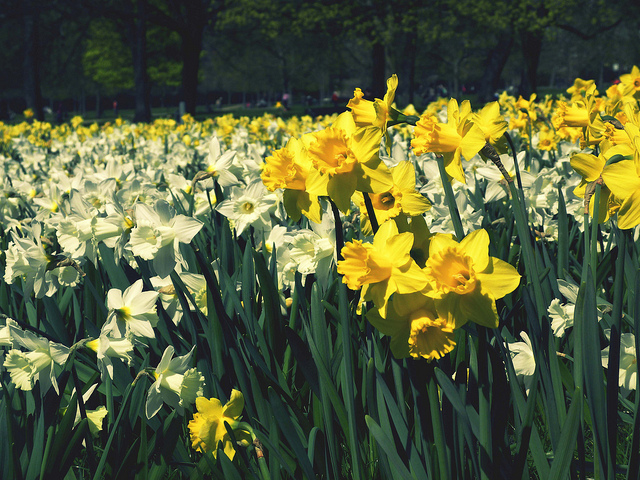 Flowers in Hyde Park Image Source:  gorfor