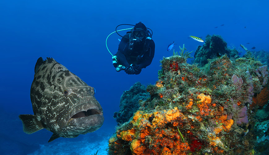 royal-holiday-hotel-resort-buceo-mexico-cozumel